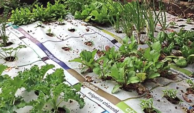 4 façons de cultiver facilement vos légumes en ville