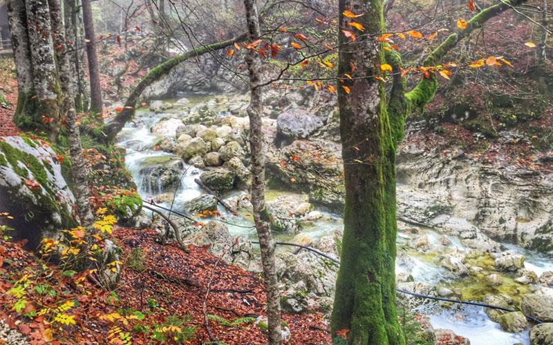 Conseils pour un road trip culinaire en Slovénie